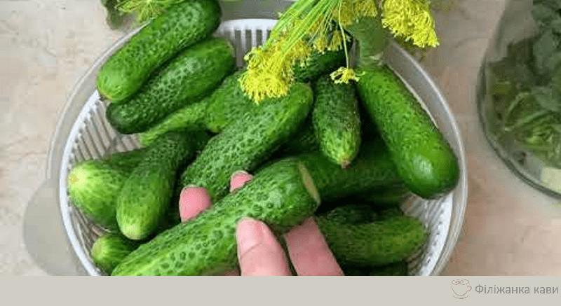 🥒 Ось так треба робити малосольні Огірки. Найправильніший спосіб. Бабуся навчила готувати Так!