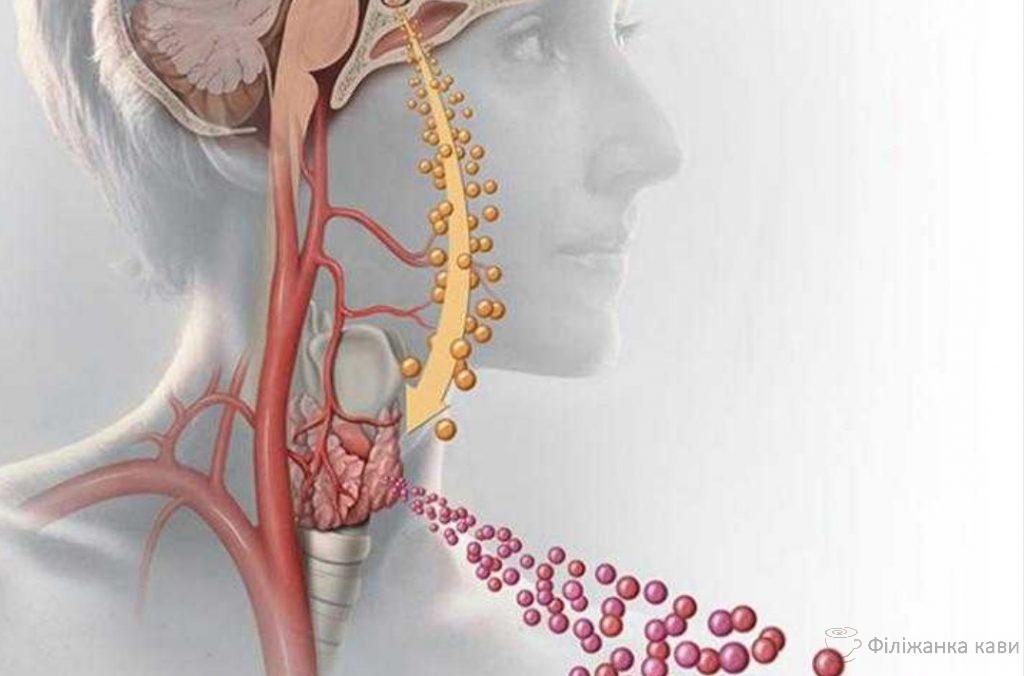 Вплив на організм порушення роботи щитовидної залози!