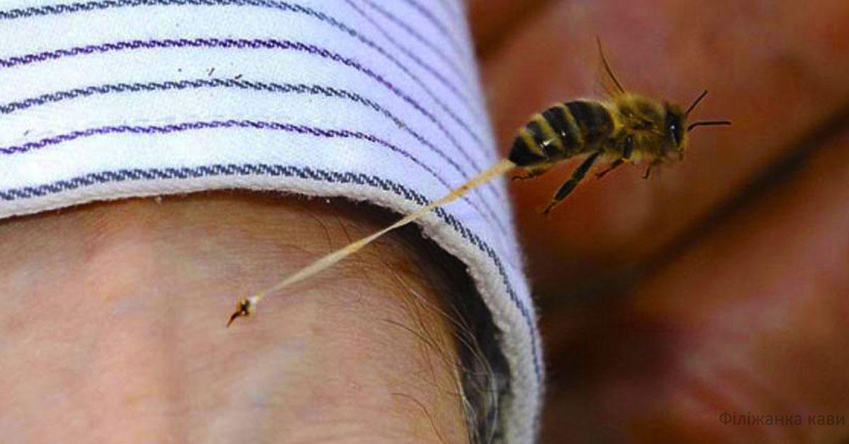 Перша допомога при укусі бджоли або оси! Ось що потрібно зробити