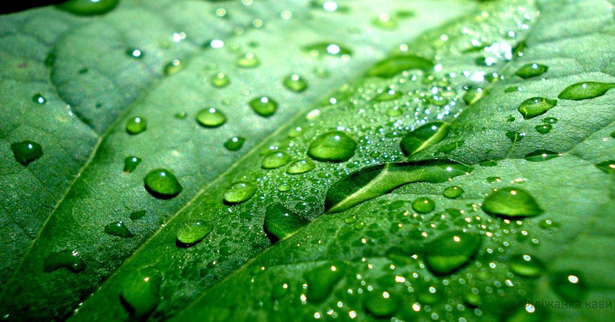 Життєва сила цієї рослини позбавить від гастриту, геморою, гіпертонії, діабету і навіть куріння!