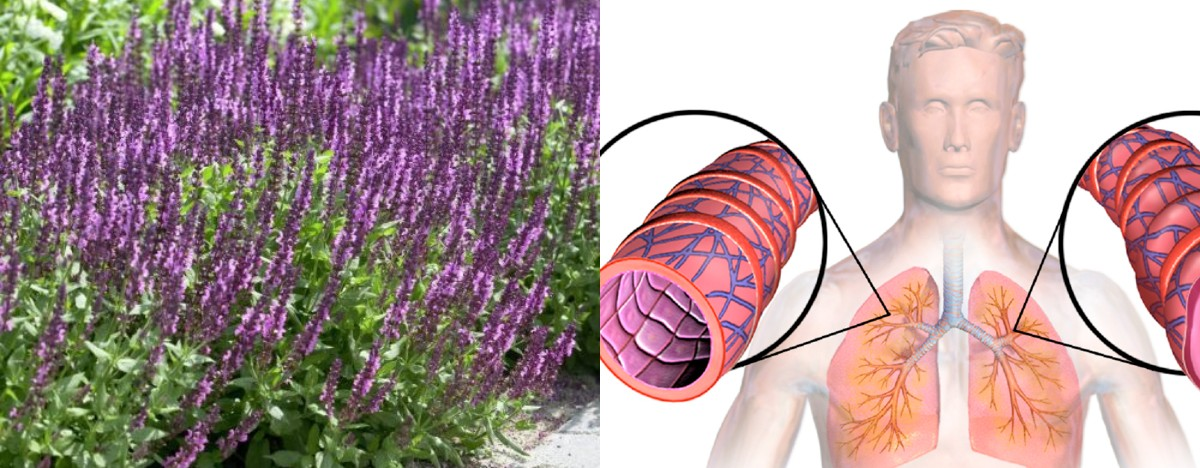 5 домашніх засобів допоможуть запобігти напади астми, усунуть мокротиння і запалення